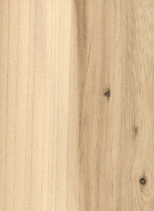 brest-drvo-01