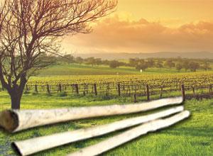 vinogradarski-stubovi-bagrem